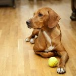 Flooring to Avoid With Pets